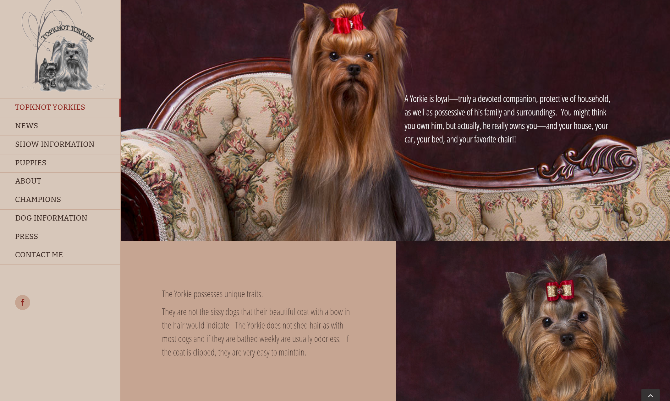 Website Design Development For Topknot Yorkies Tracy Technologies